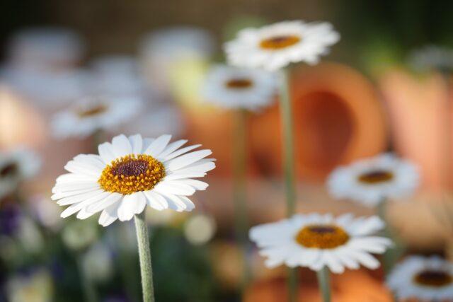 Trädgårdsmöten